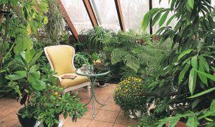 Pielęgnacja roślin w ogrodzie zimowym. Jak warunki zapewnić roślinom w przydomowej oranżerii?