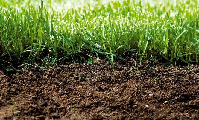 Poprawiamy jakość gleby