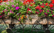 Ogród rustykalny. Jak wykorzystać stare meble i sprzęty w ogrodzie w stylu wiejskim?