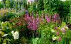 Ogród wiejski ZDJĘCIA