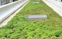 Zielone dachy w domach jednorodzinnych
