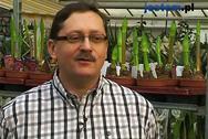 Pędzenie roślin cebulowych zimą - jak to zrobić